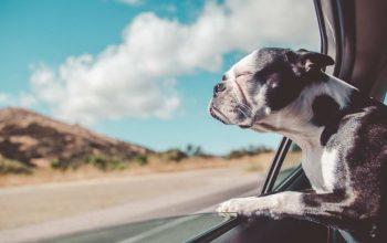 Viagem de férias para animais de estimação: leve seu animal de estimação com você
