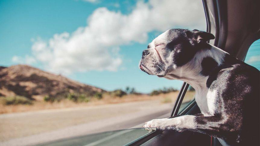 Viagem de férias para animais de estimação