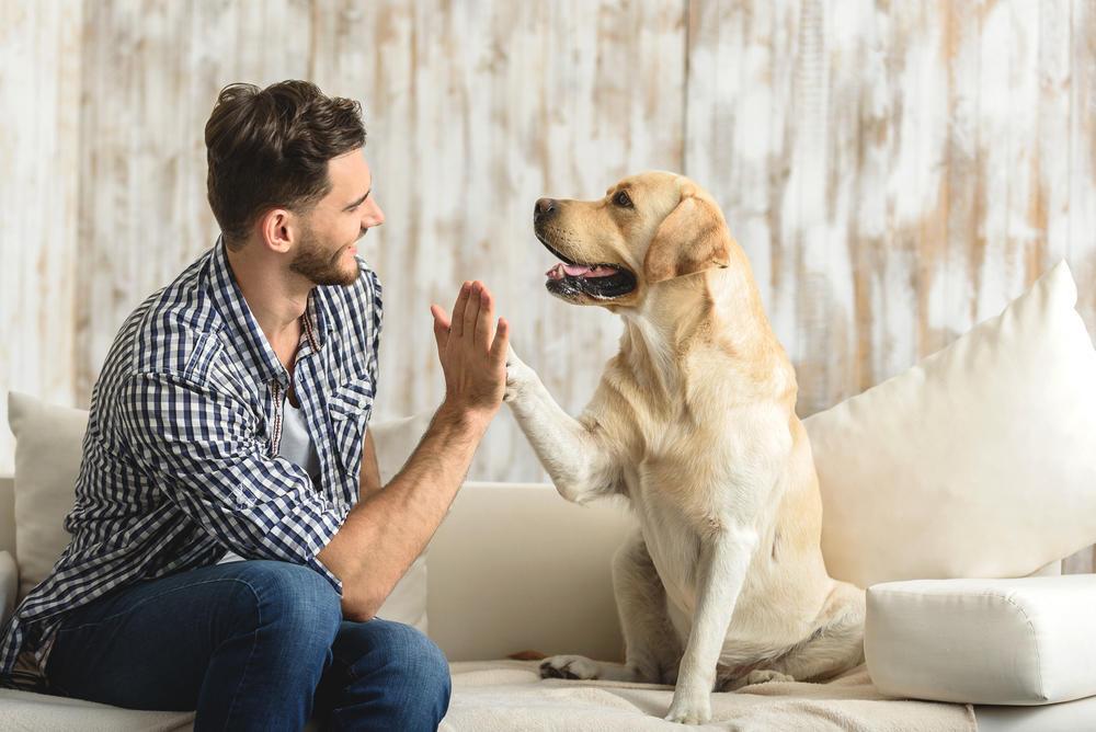 Aspectos a considerar antes de ter um animal de estimação em seu departamento